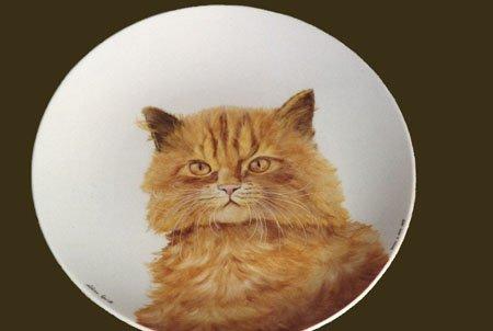 gatto-piatto